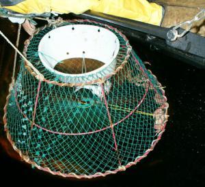 ловушка для ловли крабов купить