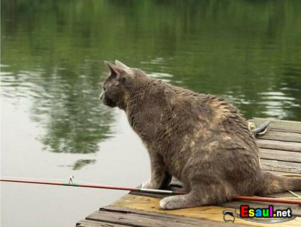 фото как кошка ловит рыбу